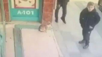 Bayrampaşa´da bir marketin önünde bulunan kedi, görenleri hayrete düşürdü.