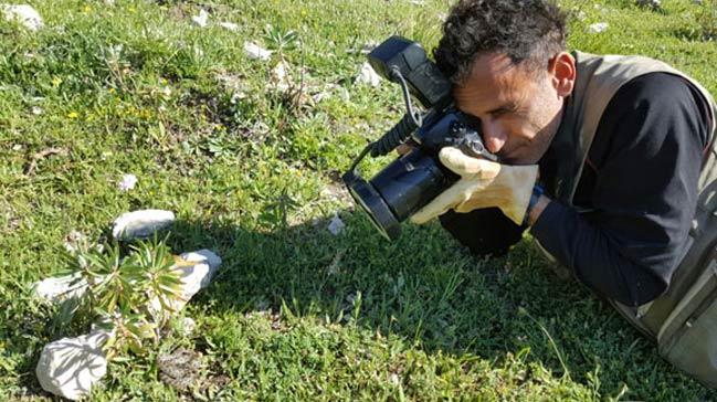 Geyik Dağları'nda yeni engerek türü keşfedildi