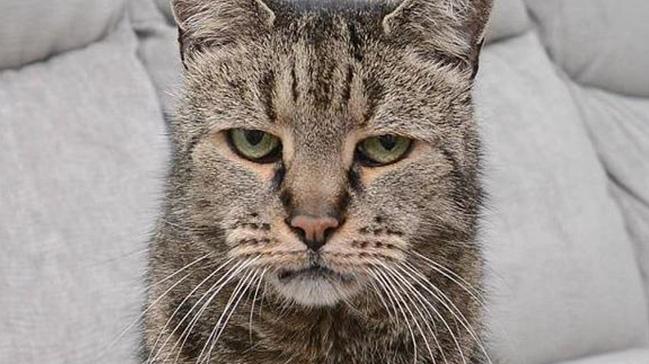 Dünyanın en yaşlı kedisi Nutmeg öldü