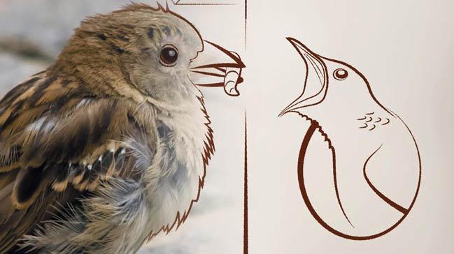 Vakıf Katılım'la kuş evleri yeniden canlanıyor