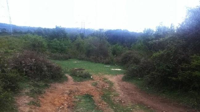 Sarıyer'de ormanlık alanda yanmış ceset bulundu