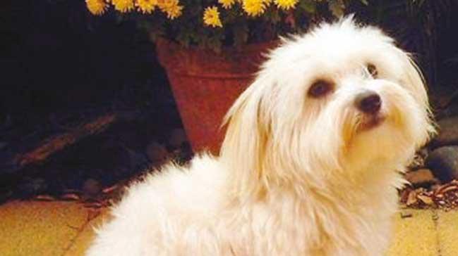 Boşanma davasında köpeğe velayet