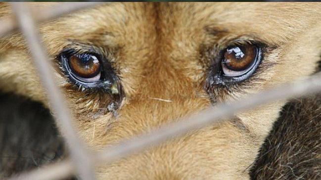 Bakan Pakdemirli: Hayvanlara işkence edene hapis cezası getiriliyor