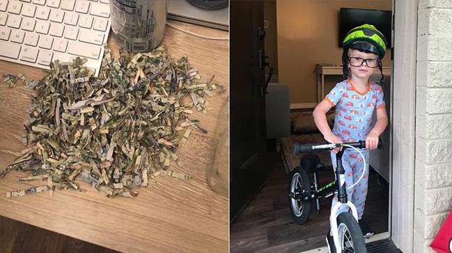 ABD'de 2 yaşındaki çocuk ailesinin birikimi olan bin doları kağıt imha makinesine attı