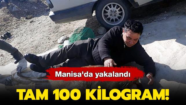 Tam 100 Kilogram! Manisa'da yakalandı