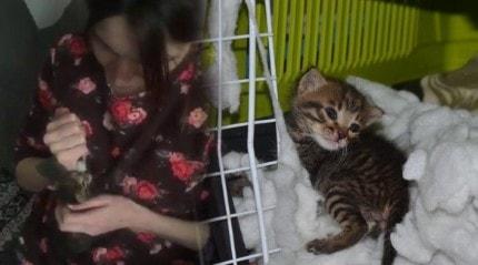 Doğum yapan kadın, kedinin süt annesi oldu